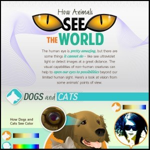 How animals see the world Infographic1 300x300