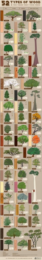 52 Types of Wood and the Trees They Come From 166x1024