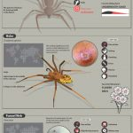 A guide to the most dangerous spider bites and the symptoms they cause 150x150 1