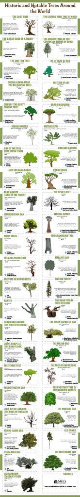 Historic and Notable Trees Around the World 165x1024