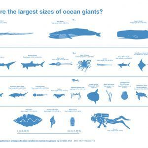 What Are The Largest Sizes of Ocean Giants Infographic 300x300 1 300x300