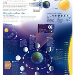 8 Phases Of The Moon - Infographic