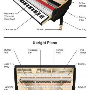 Anatomy of a Piano - Infographic