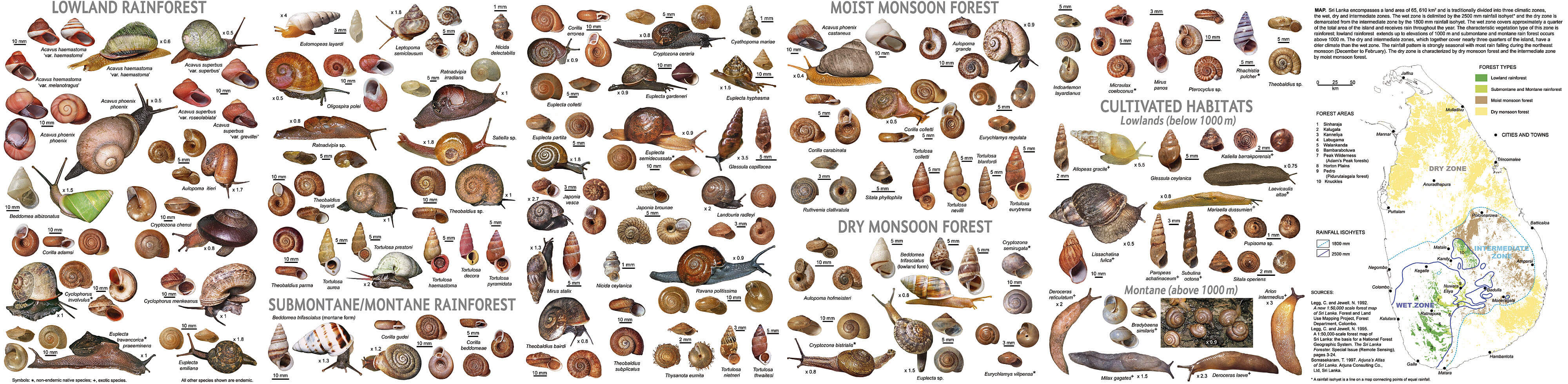 Snail identification guide photo